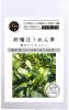 針種ほうれん草(22g)【自然栽培の種・固定種】