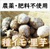 【予約販売3月上旬より順次出荷】種イモ 里芋(さといも/サトイモ)1�/3�/20kg【国産】【農薬・化学肥料なし】