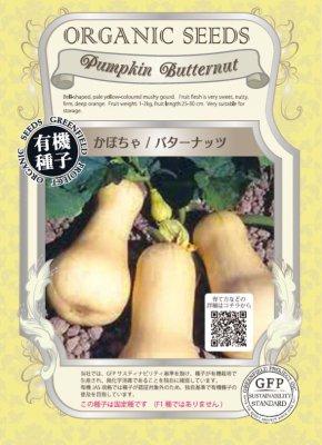 かぼちゃ/バターナッツ(小袋:2.50g)【有機種子・固定種】(大袋サイズも有ります)