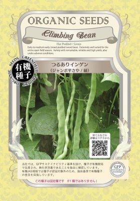 つるありインゲン(小袋:18粒)【有機種子・固定種】(大袋サイズも有ります)