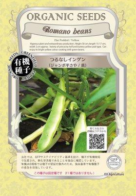 つるなしインゲン(小袋:18粒)【有機種子・固定種】(大袋サイズも有ります)