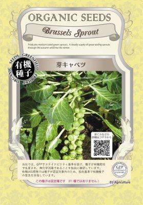 芽キャベツ(小袋:0.50g)【有機種子・固定種】(大袋サイズも有ります)