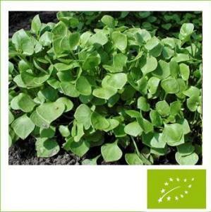 冬すべりひゆウインターパースレイン(小袋:0.5g)【有機種子・固定種】(大袋サイズも有ります)