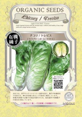 チコリ/トレビスライトグリーンボール/ウラナス(小袋:0.03g)【有機種子・F1種】(大袋サイズも有ります)