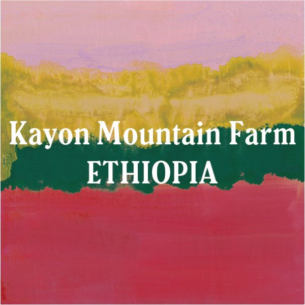 <img class='new_mark_img1' src='//img.shop-pro.jp/img/new/icons29.gif' style='border:none;display:inline;margin:0px;padding:0px;width:auto;' />Ethiopia Kayon Mountain Farm 200g