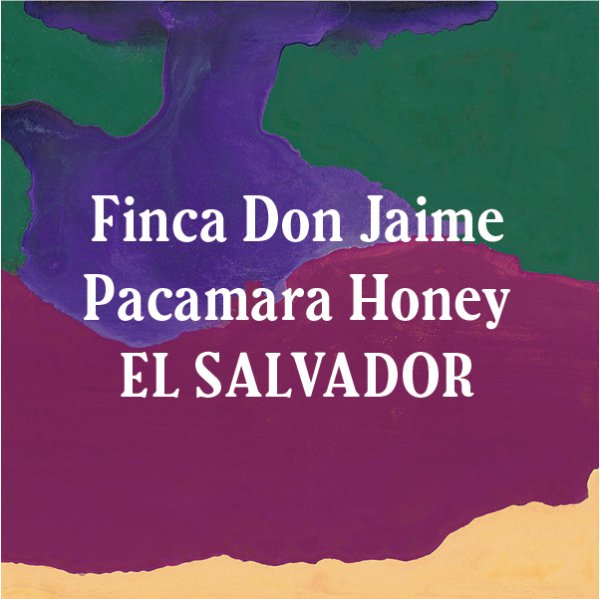<img class='new_mark_img1' src='//img.shop-pro.jp/img/new/icons5.gif' style='border:none;display:inline;margin:0px;padding:0px;width:auto;' />El Salvador Finca Don Jaime Pacamara Honey 200g