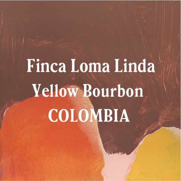 <img class='new_mark_img1' src='https://img.shop-pro.jp/img/new/icons29.gif' style='border:none;display:inline;margin:0px;padding:0px;width:auto;' />Colombia Finca Loma Linda Yellow Bourbon
