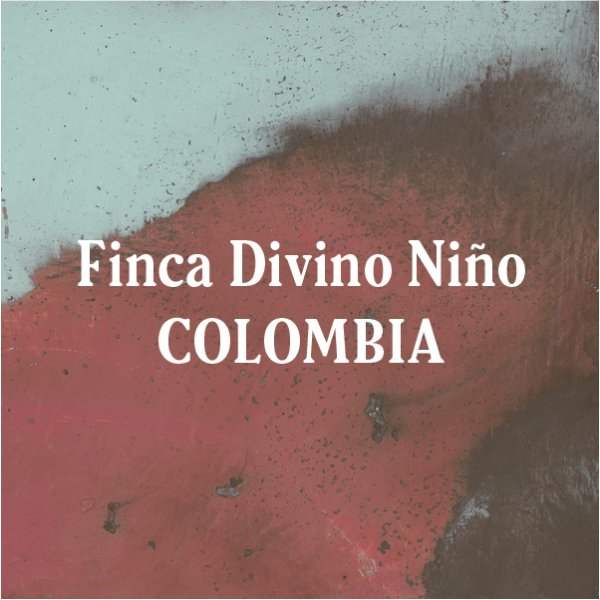 <img class='new_mark_img1' src='https://img.shop-pro.jp/img/new/icons29.gif' style='border:none;display:inline;margin:0px;padding:0px;width:auto;' />Colombia Finca Divino Niño 200g