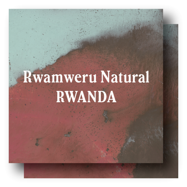 <img class='new_mark_img1' src='https://img.shop-pro.jp/img/new/icons5.gif' style='border:none;display:inline;margin:0px;padding:0px;width:auto;' />Rwanda Rwamweru Natural 400g (200g×2)