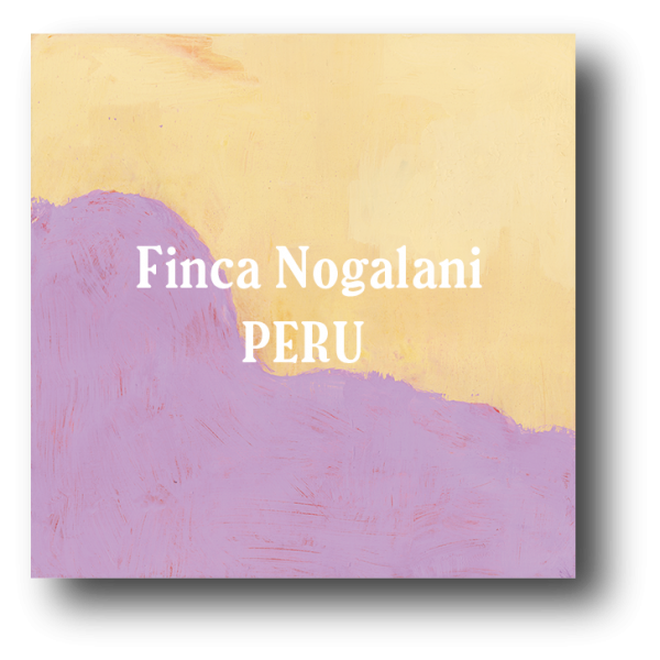<img class='new_mark_img1' src='https://img.shop-pro.jp/img/new/icons5.gif' style='border:none;display:inline;margin:0px;padding:0px;width:auto;' />Perú Finca Nogalani 200g
