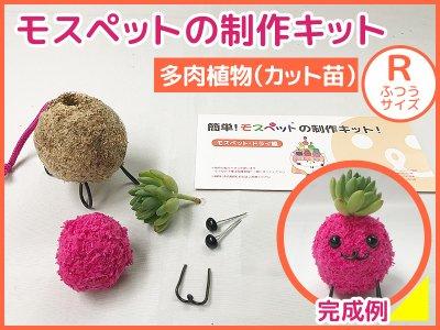 【制作キット】多肉植物(R)アート水苔