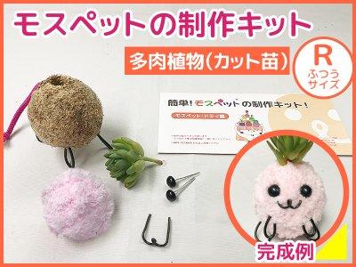 【制作キット】多肉植物(R)ふわもこ毛糸
