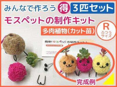 【制作キット】3匹セット 多肉植物(R)アート水苔