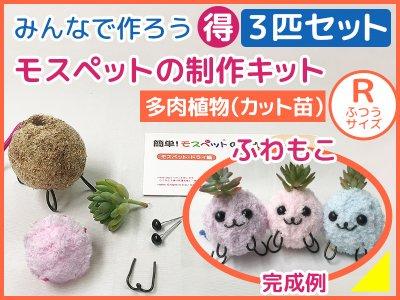 【制作キット】3匹セット 多肉植物(R)ふわもこ毛糸