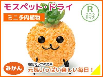 モスペット・ドライ(R)みかん(橙)