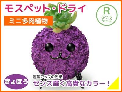 モスペット・ドライ(R)きょほう(紫)
