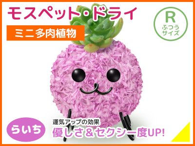 モスペット・ドライ(R)らいち(うす紫)