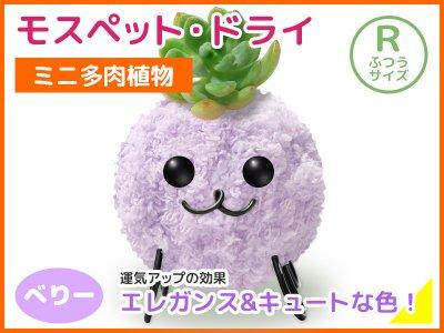 モスペット・ドライ(R)べりー(うす紫)