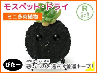 モスペット・ドライ(R)びたー(黒)