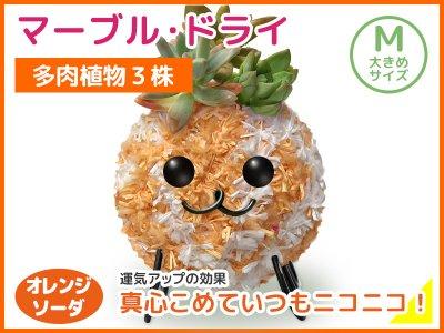 マーブルドライ(M)オレンジソーダ
