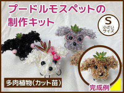 【アニマルキット】プードルモスペット(S)多肉植物