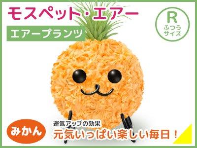 モスペット・エアー(R)みかん(橙)