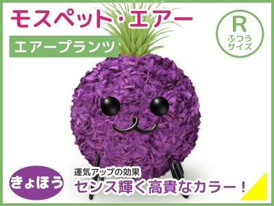モスペット・エアー(R)きょほう(紫)