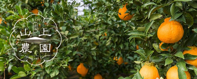 山上農園オンラインショップ - コクのある大将季や不知火(デコポン)を鹿児島からお届け