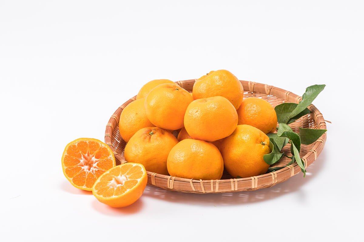 【送料無料】お買い得デコポン親品種!ハウス栽培ポンカン家庭用5kg