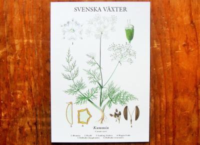 スウェーデンの植物カード kummin
