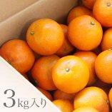 奄美大島産完熟たんかん 3kg【送料無料】