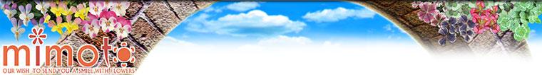 【見元園芸】オリジナルビオラ・パンジー、オリジナルクローバー生産、販売