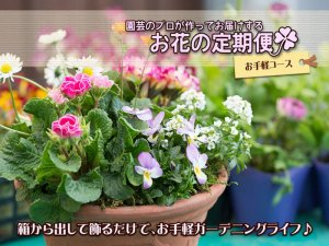 <img class='new_mark_img1' src='//img.shop-pro.jp/img/new/icons25.gif' style='border:none;display:inline;margin:0px;padding:0px;width:auto;' />花の定期便★お手軽コース (代金引換 都度お支払い)