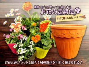 <img class='new_mark_img1' src='//img.shop-pro.jp/img/new/icons25.gif' style='border:none;display:inline;margin:0px;padding:0px;width:auto;' />花の定期便★自分で植えられるコース(お得な一括お支払い)