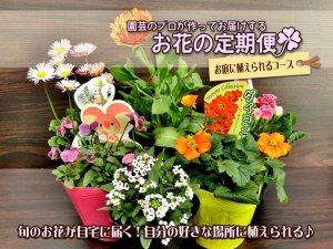 <img class='new_mark_img1' src='//img.shop-pro.jp/img/new/icons25.gif' style='border:none;display:inline;margin:0px;padding:0px;width:auto;' />花の定期便★お庭に植えられるコース(代金引換 都度お支払い)