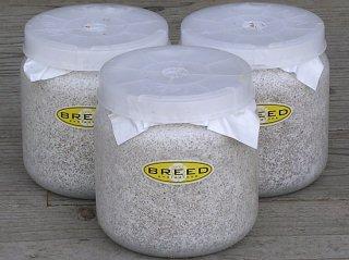 BREED 1500ml 菌糸ビン(2次発菌・手詰め) 3本セット 好評販売感謝価格