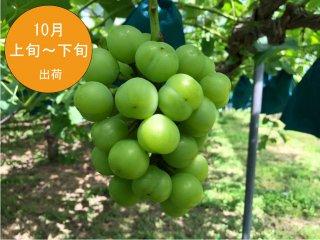 瀬戸ジャイアンツ 2kg(3〜4房入)