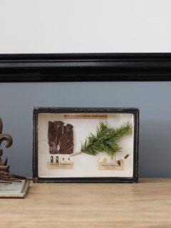 insect specimen(標本)
