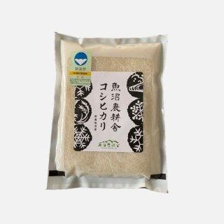 新米予約受付中 令和3年産  魚沼産コシヒカリ 特別栽培米 精米 1kg×1袋
