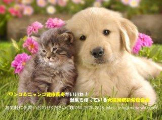 犬猫用総合栄養食品・顆粒タイプ(免研ペット糖鎖食品) A-1